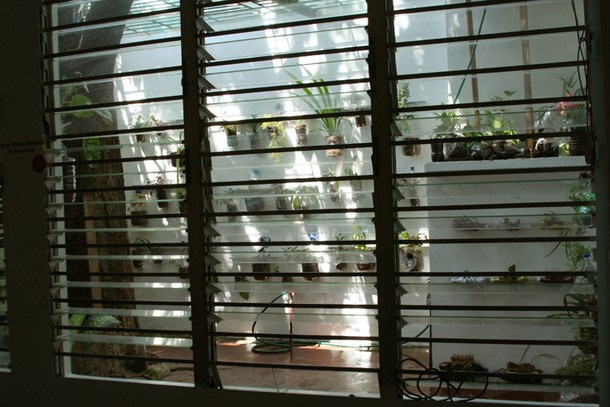 Projects Velada Sta Lucia, Venezuela / Vertical garden from inside