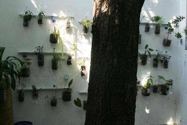 Projects Velada Sta Lucia, Venezuela / Vertical garden in refurbished patio