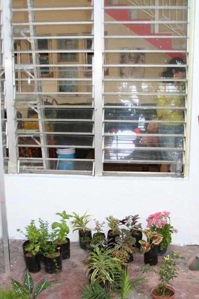 Projects Velada Sta Lucia, Venezuela / Patio plants arriving - white walls-