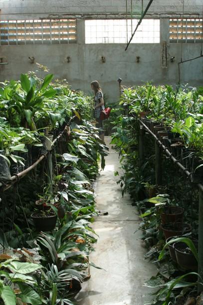 Projects Velada Sta Lucia, Venezuela / Choosing plants - Vivero-